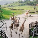 תמונה של גן חיות בעיר פראג
